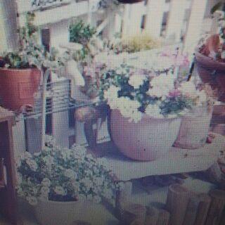 【東京】観葉植物処分(盆栽)&鉢植え植木引き取り「江戸川区・江東...
