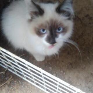 ふわふわ🎶🐈甘えん坊な仔猫です