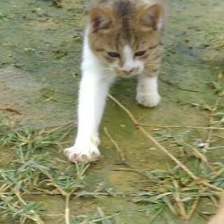 抱っこ大好き😍甘えん坊な仔猫です💕