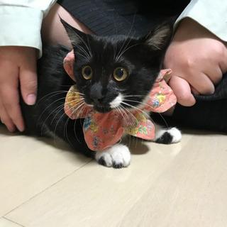 ゴロゴロスリスリ仔猫
