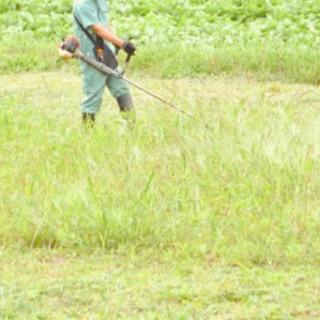 庭、管理地等の草刈作業