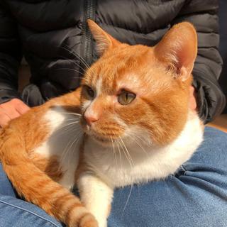 10歳以上雄猫(おじじ)の里親募集しています。 - 長岡京市