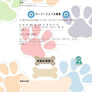 犬猫パーソナルカラー診断(写真診断のみ遠方他県OK)お値段調整し...