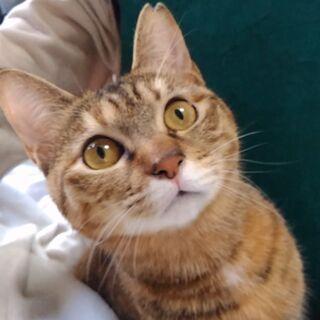 信頼度№1.猫がオーナーの「お見合い会」(ルビースター)
