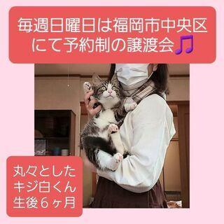 毎週日曜日は福岡市中央区にて譲渡会🎵キジ白くんの画像