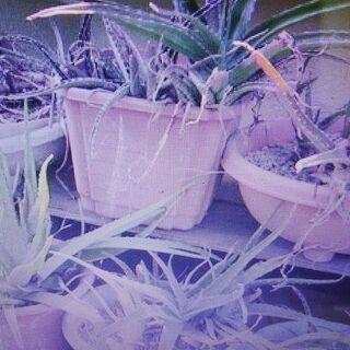 【東京】鉢植えの花&木引き取り「狛江市・稲城市・多摩市・町田市・...