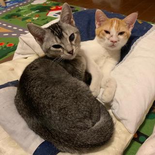 仲良し子猫😸センターレスキュー
