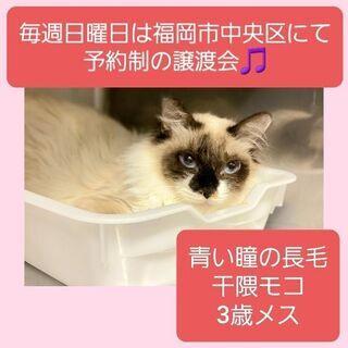 毎週日曜日は福岡市中央区にて予約制の譲渡会🎵干隈モコ