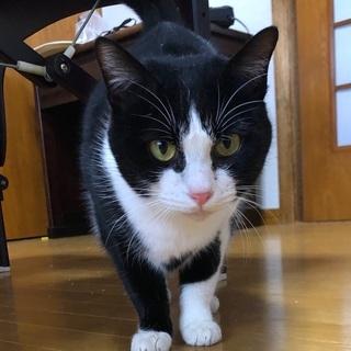 残念ながら猫エイズキャリアですが、とても元気で美猫です