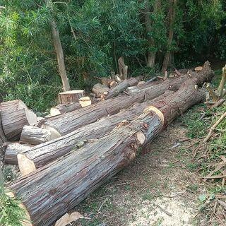 檜の丸太直径50cm~70cm、長さ3m位