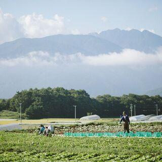 【富士見】農作業スタッフ大募集!未経験者大歓迎!!【Wワーク可】...