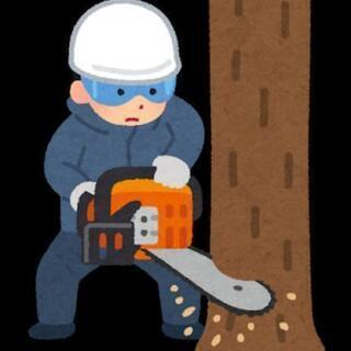伐採(木、竹)、除草、荒れ地整理 ご相談ください