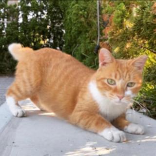 臆病でビビリ、温厚で愛嬌たっぷりな野良猫の飼い主さん募集しています。