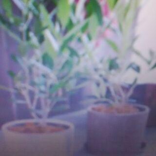 【東京】観葉植物引き取り「杉並区・中野区・板橋区・練馬区・大田区...