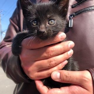 生後2ヶ月の可愛い子猫