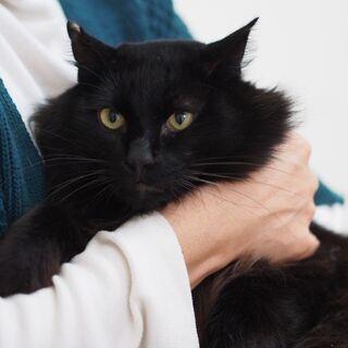 フレンドリー長毛黒猫やまと君