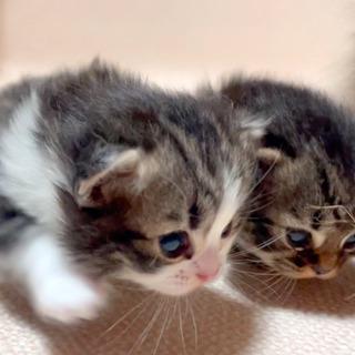 子猫に毛布ください!