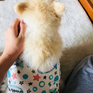 老犬用のおむつ、タオル、毛布などください