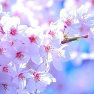 カラーヒーリング&チャクラバランシング【春のキャンペーン】