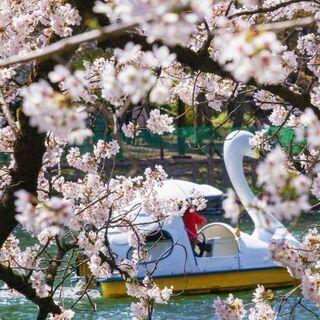 2021/3/28(日)13:00~【吉祥寺】桜シーズン到来🌸ー...