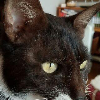 超スリスリのシニア猫♪ 猫にかまってほしい方にピッタリです。
