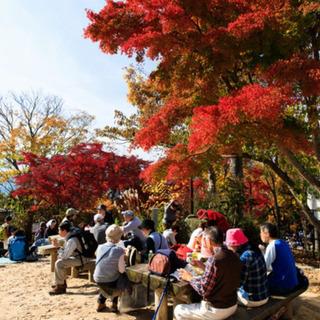 ワンコイン高尾山ハイキング散策イベント 現在35名 3/14日曜日の画像