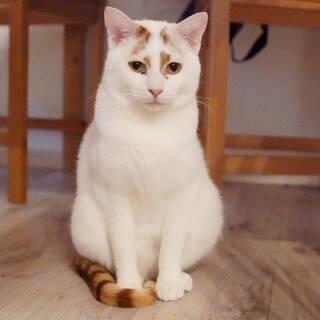 猫さん大好き白茶のポセ君