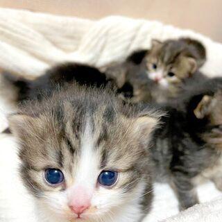 子猫に毛布やバスタオル、普通のタオルをください!