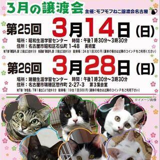 3/28(日) 猫の譲渡会 in 名古屋市瑞穂生涯学習センター