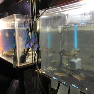 水槽、熱帯魚 引取させて頂きます。