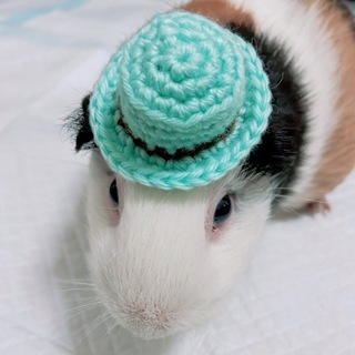 【高円寺】 でぐふぇすさんの小動物用帽子・アクセサリー等を…