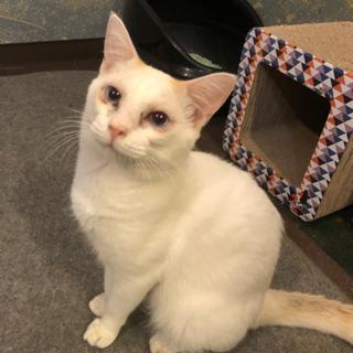 甘えん坊な白猫ちゃん