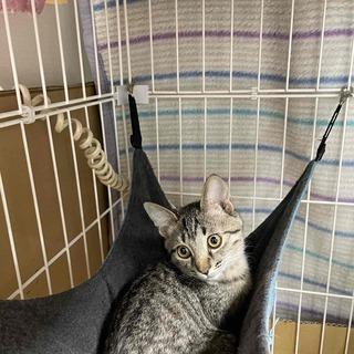 猫を幸せにする会、里親さん募集中です。