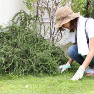 沖縄ネコの手の庭掃除