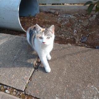 ミケ猫の姉妹🐱生後6ヶ月