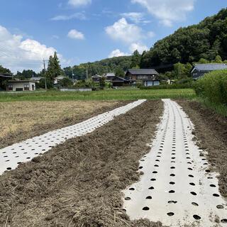にんにく畑で草取り作業のお手伝いボランティア募集