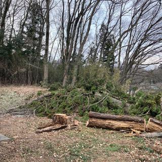 杉の木の幹