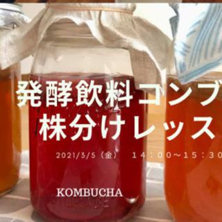 3/5発酵飲料コンブチャ 株分レッスン