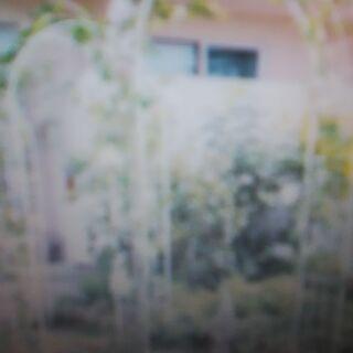 【神奈川&東京】園芸用アーチ(支柱)処分・引き取り「横浜・川崎・...