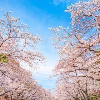 """2021/3/30(火)13:00~【上野】桜満開!春の""""上野恩..."""