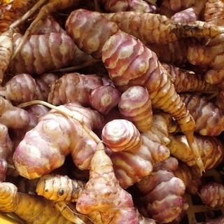 【花粉症対策食品】 自然栽培キクイモ:西洋菊芋トピナンブール品種...