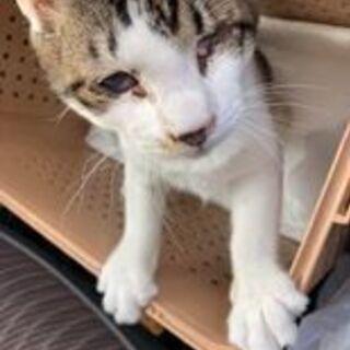 【障害のある猫ちゃんの命を助けてください】