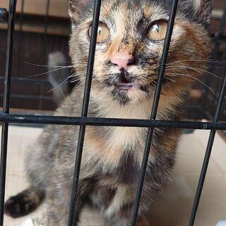 生後3ヶ月半のサビ猫