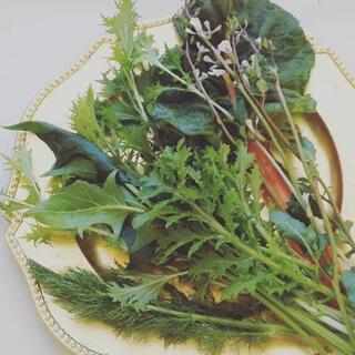 オリジナルサラダセット【よねベジ】