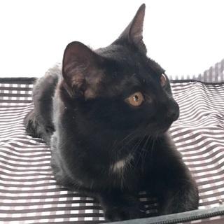 黒猫里親募集!
