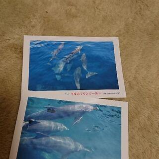イルカ~の画像