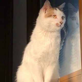 保護猫 オス 一歳 キャリア持ち