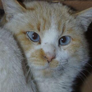 【動画付き】珍しく素敵なクリーム色の猫