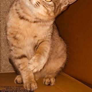 右眼が不自由なキジトラ子猫