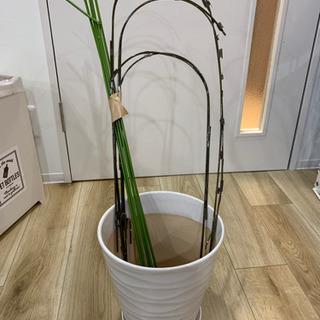 【お譲り確定】植木鉢 白の陶器